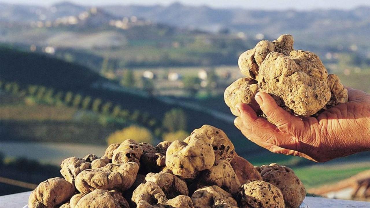 Truffle Days in Istria