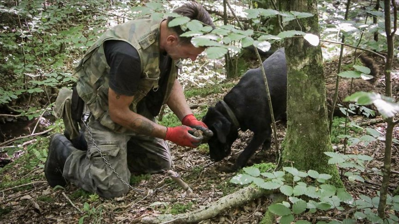 Truffle hunting in Istria
